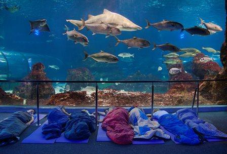 Dormir con tiburones en el Aquarium de Barcelona