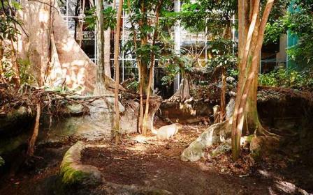 El Bosque inundado en el CosmoCaixa