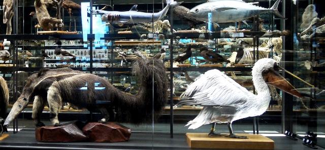 Animales disecados en el Museo Blau, en el Parc del Forum