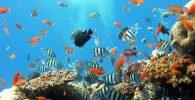 Aquarium de Barcelona en el Port Vell