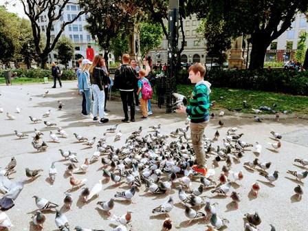 Palomas en la Plaza Cataluña