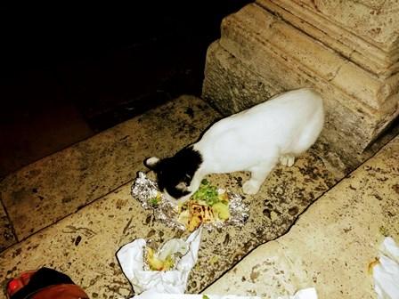 Gato comiendo con nosotros en las escaleras de la Iglesia de San Blas en Dubrovnik